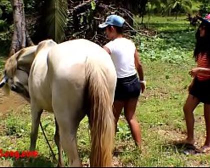 Horse Gag Porn